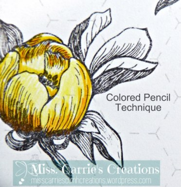 ttwatercolorpencils-coloredpencil-misscarriescreations